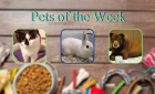 Pets of the Week for March 30, 2021