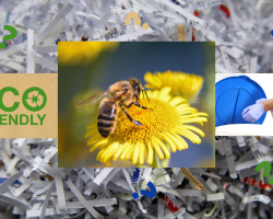 Keeping Your Home and Business Eco-Friendly
