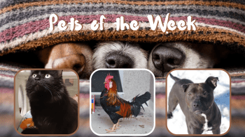 Pets of the Week for April 6, 2021