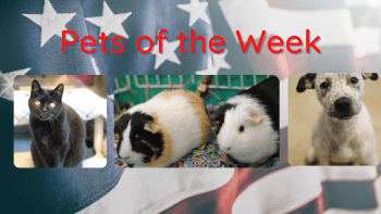 Pets of the Week for July 19, 2021