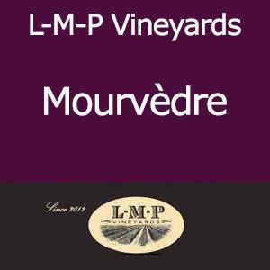 Suisun Valley, L-M-P Vineyards Mourvedre Grape