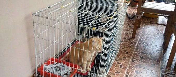 Update Harga Kandang Kucing Dari Kayu Berbagai Ukuran Daftar Harga Tarif