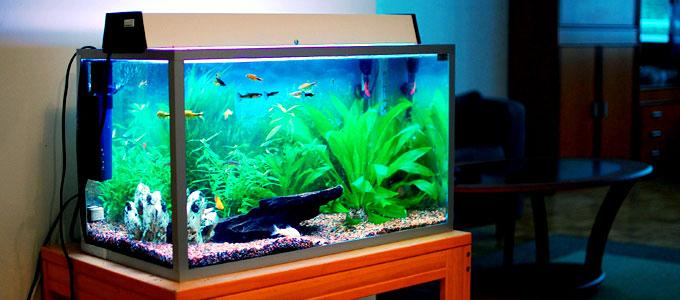 Update Spesifikasi Kelebihan Dan Harga Aquarium Nisso 90cm Daftar Harga Tarif