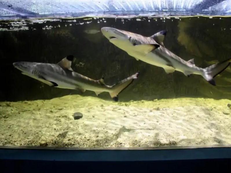 monster aquarium cimory