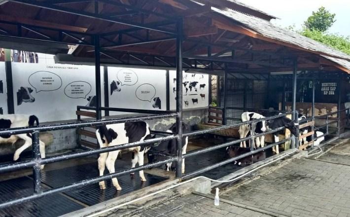 tiket masuk farmhouse susu