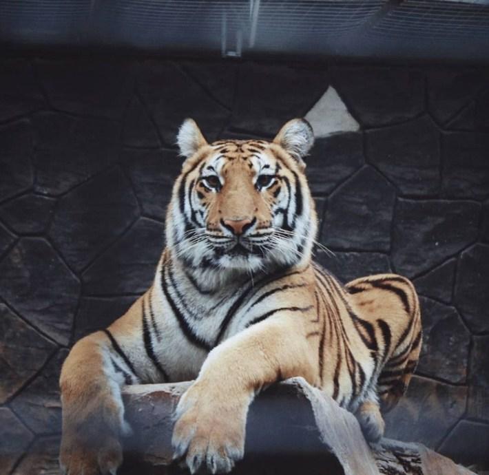 tiket masuk bandung zoo