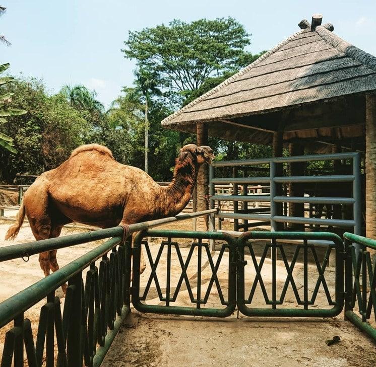 tiket masuk ragunan zoo
