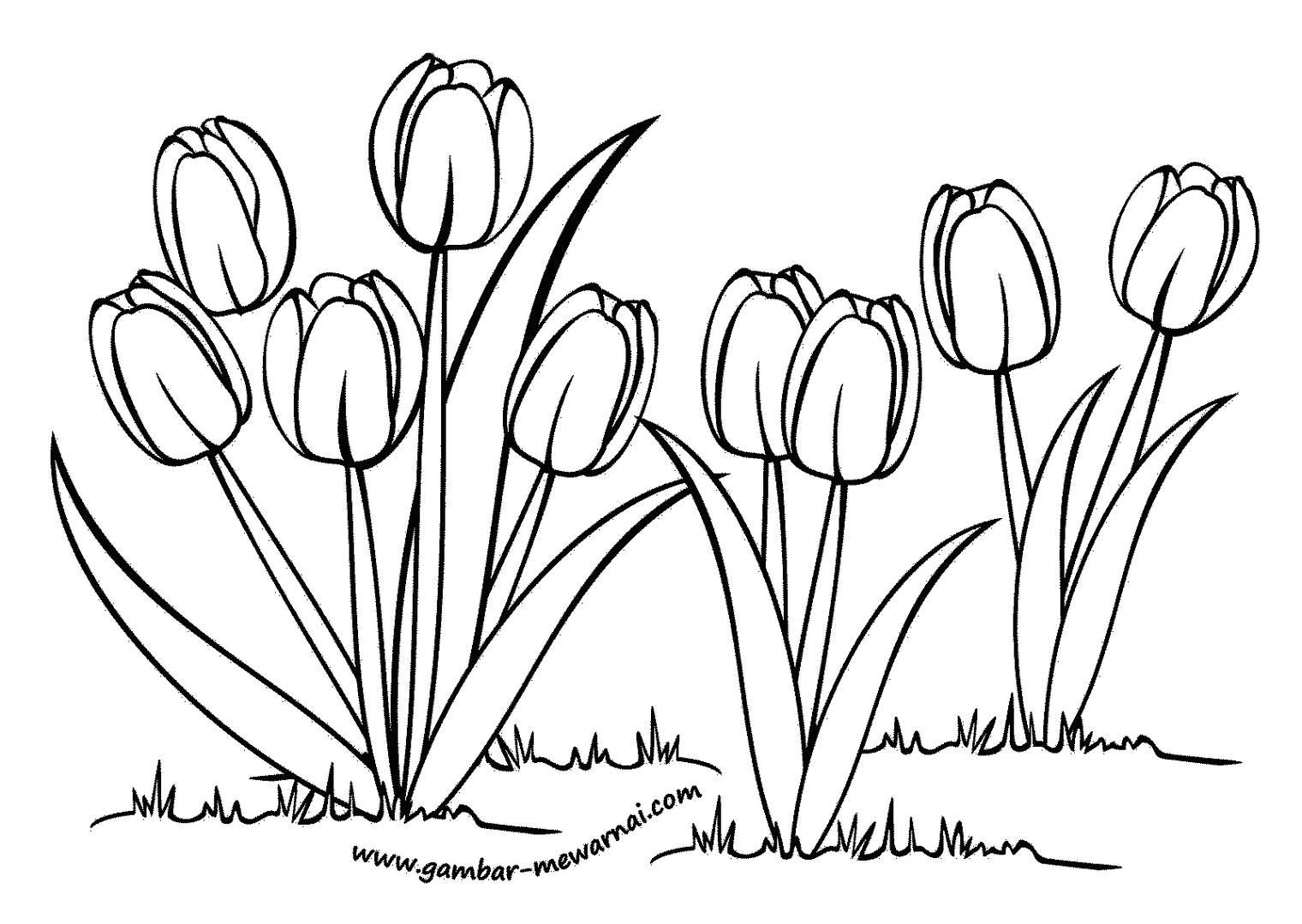 100 Gambar Sketsa Bunga Tulip Yang Mudah Kekinian Gambar