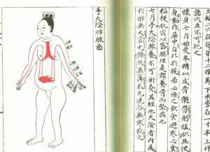 医心方にある妊娠7ヶ月の女性と手太陰肺経の図