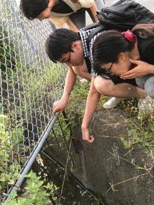 水路でエビ採りする風景
