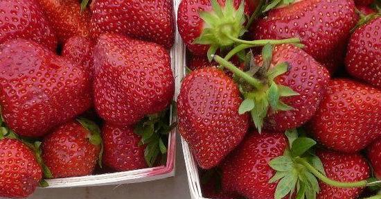 strawberry photos