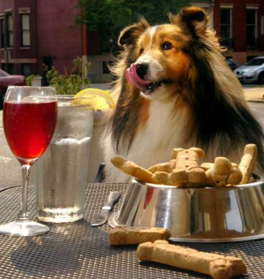 DiningDog in harlem
