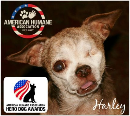 Harley - Hero Dog Awards