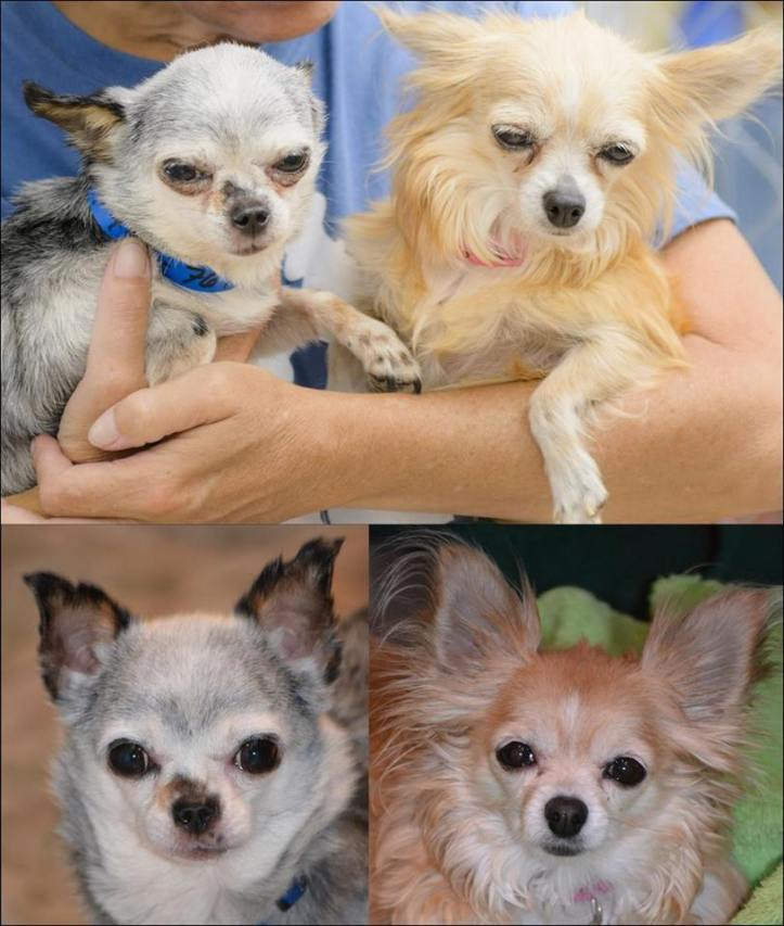 Gwinnie and Teddy - Before and After