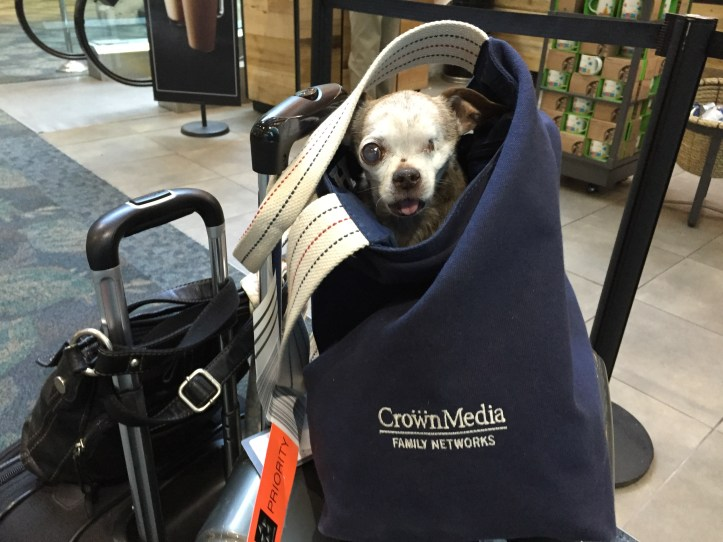 At the airport in Orlando. Harley is hanging out in his Hallmark bag!
