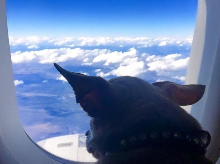 harley-flying