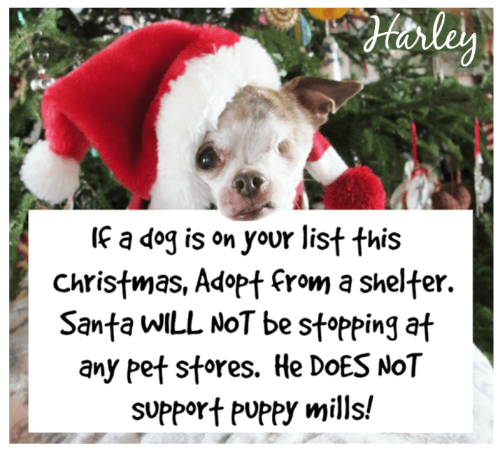 harley-santa-doesnt-shop-at-pet-stores-christmas-poster-2