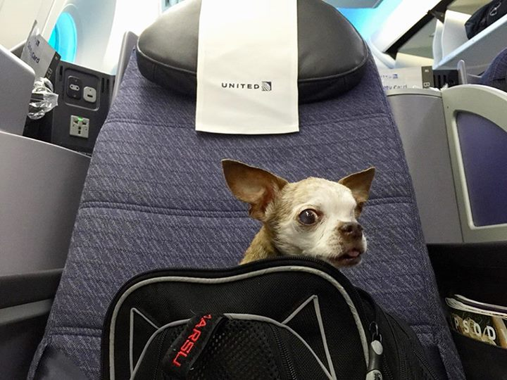 Harley sitting in his first class seat on a United Airlines flight to Los Angeles.