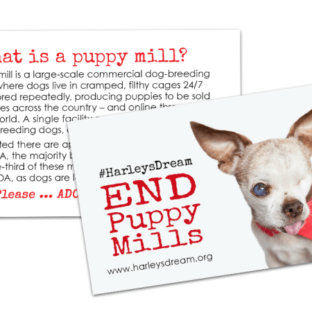 STOP puppy mills – Harley's Dream