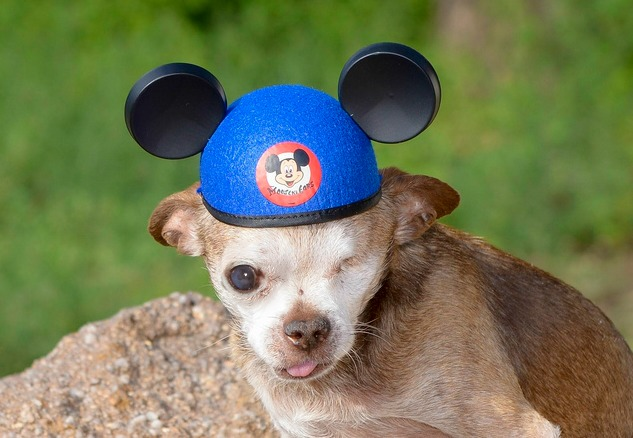harley-mikey-mouse-hat