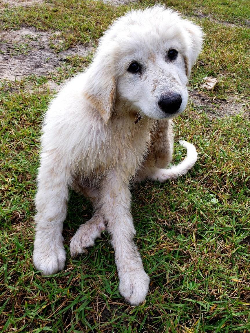 Meet Apollo