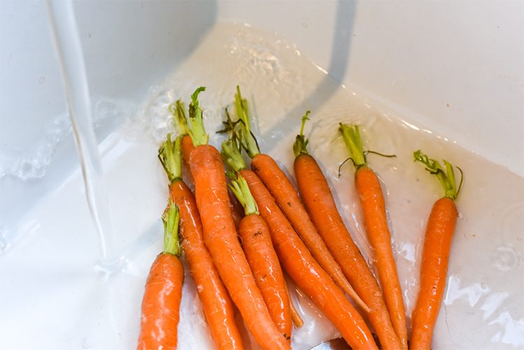 home grown carrots