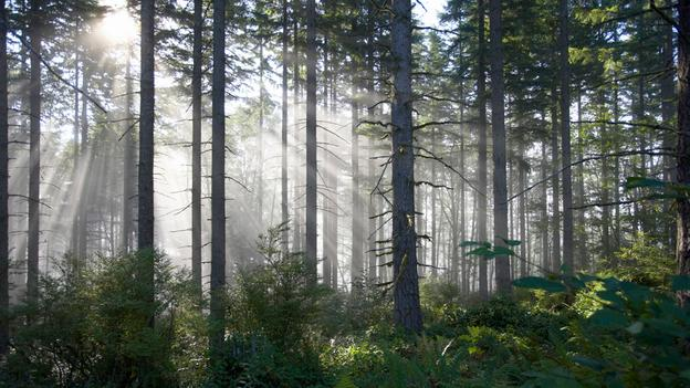 Seeing trees, Seeing the forest…