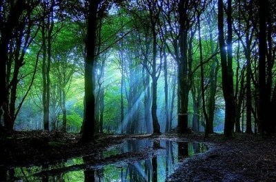 sun-rays-forest-trees-lake-beautiful-place-nature_large