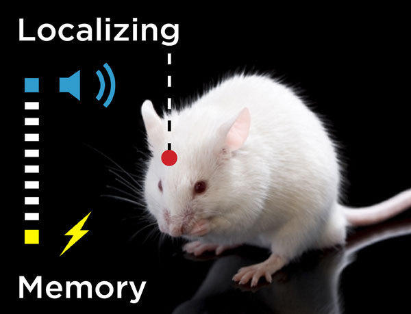 Where is memory stored? NO, we do not know!