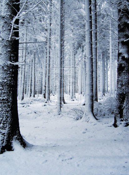 snow_forest_2