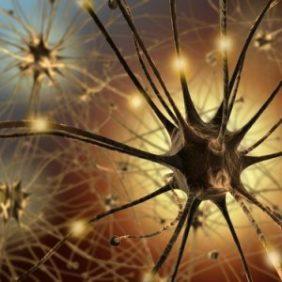 brain-plasticity-cognifit