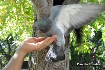 Daniela Fuentes Photo