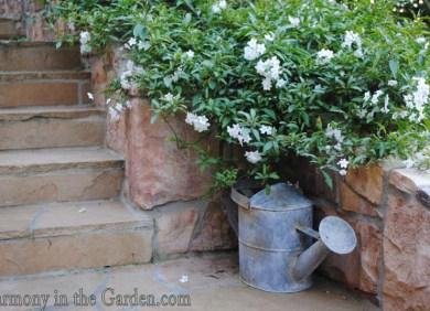 Lecia Davis's garden