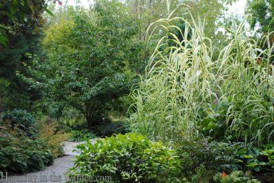 Arundo donax var. versicolor
