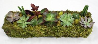 BOXHILL_Succulent_Planter