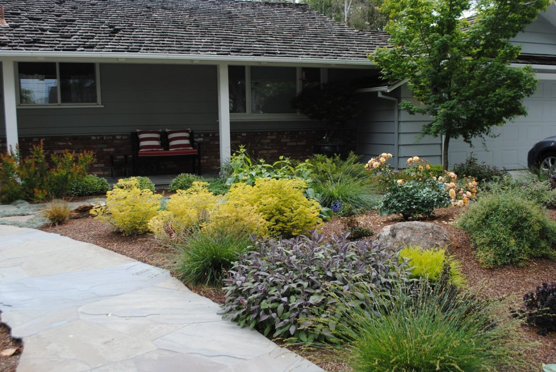 Lawn Free and Low Maintenance02
