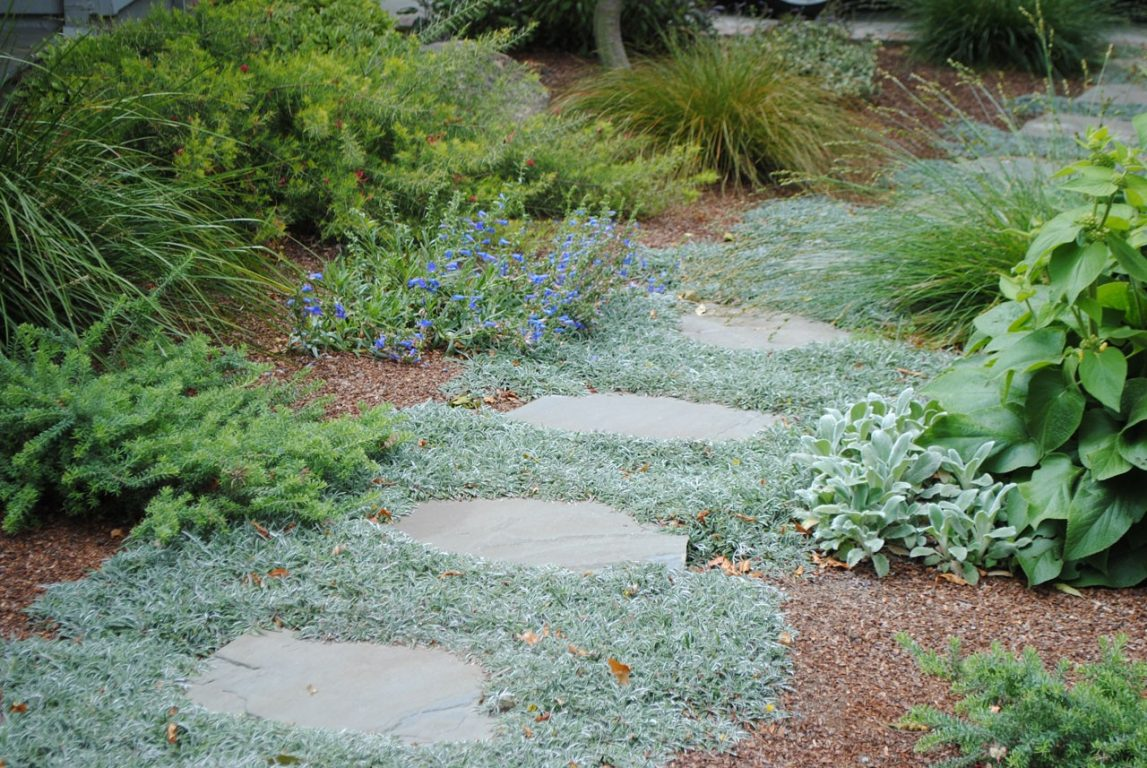 Lawn Free and Low Maintenance06