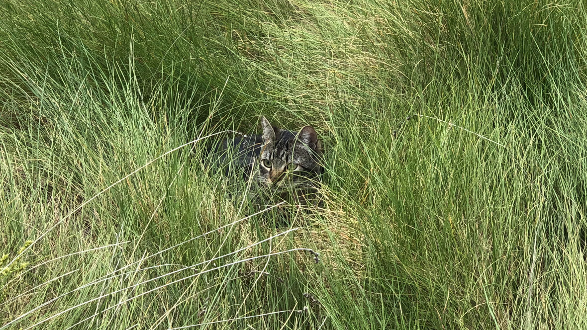 Hillside Meadow Garden-Kitty Hiding Spot-Carex