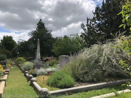 sacramento historic rose garden-perennials-native garden-northern california-pioneer cemetery