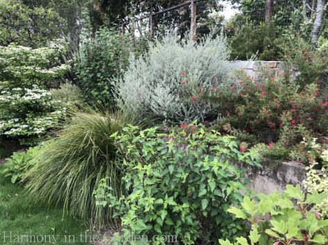 Tiers-Slopes-Northern California Gardens-westringea-grevillea