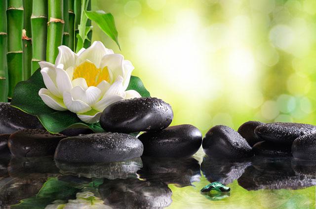 Mind Health Harmony