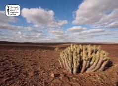 Sahara 2013-7