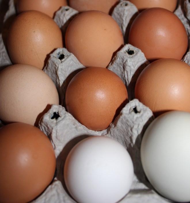 9-24-14 eggs