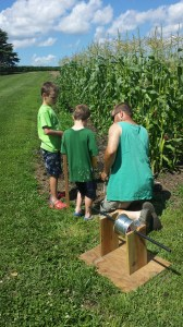 The boys learned how to install electric fence this week around the sweet corn in order to protect the crop from raccoons. Thanks to my parents for upcycling this nice solar powered fencer!