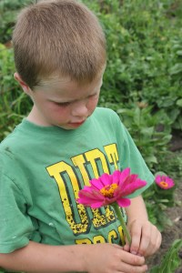 My flower picker tonight...Zinnias.