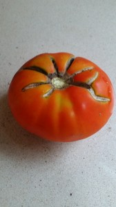 Tomatoes are not always perfect. But did you know that even those with cracks like this or brown blemishes can be used?