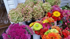 Hydrangeas, Sedums and Zinnias this week.