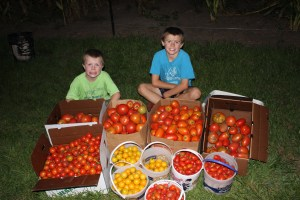 We picked just a few tomatoes. If you would like to can or freeze extra to enjoy later. Please let us know.