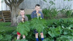 The Harner Bros are the 5th generation to raise this rhubarb originally planted on our family farm and transplanted to this location.