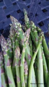 Asparagus from Chute's Farm - delicious!